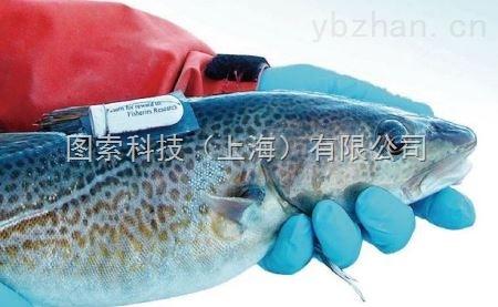 鱼类实时监测鱼类生态追踪游泳记录仪