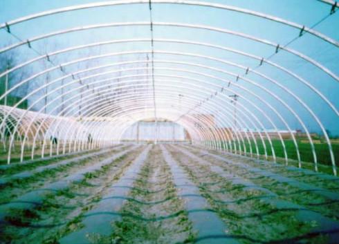 """农业""""电子警察""""——监测传感器保障农产品质量安全"""