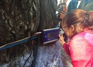 黑龙江哈尔滨利用传感器检测城市大树健康情况